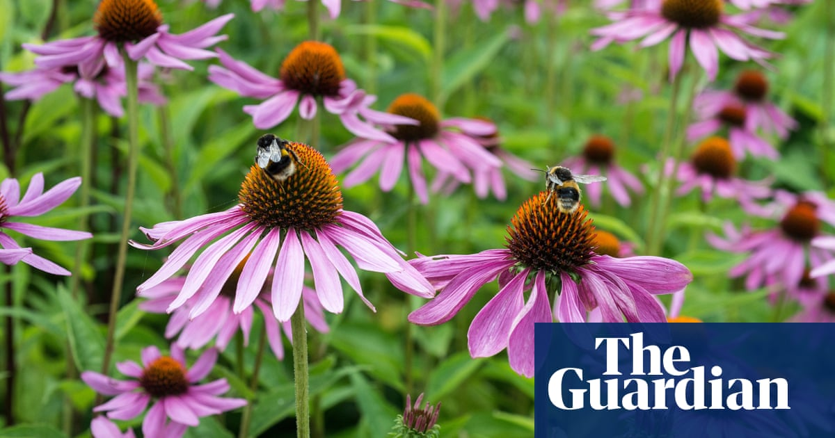 cfe244029 Create a buzz: how to help save wild bees – even if you don't have a garden