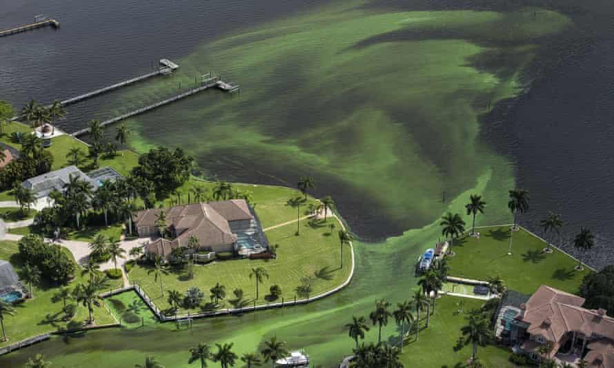 Florida algae