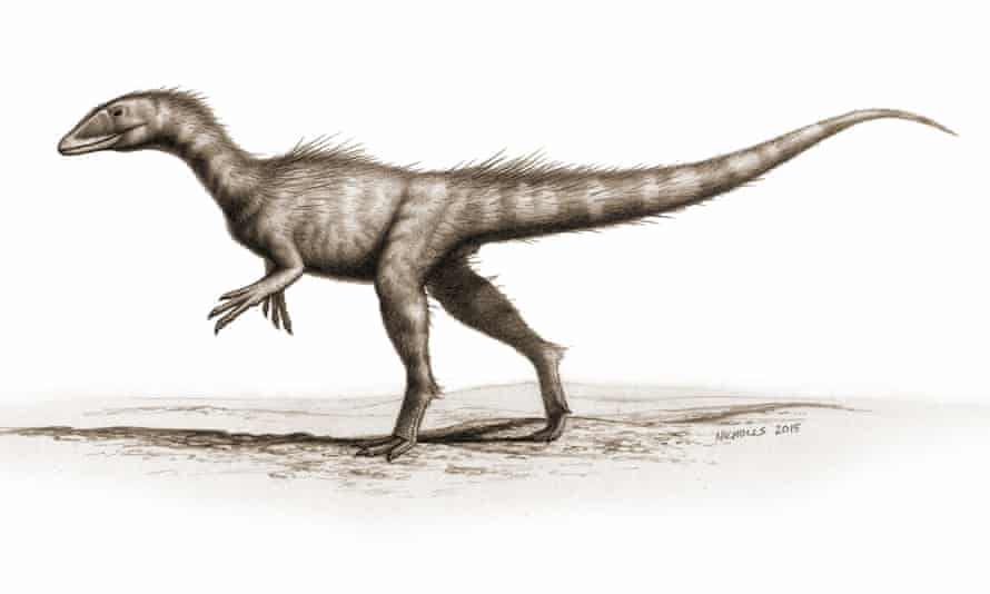 An artist's impression of <em>Dracoraptor hanigani, </em>which stood 70cm tall and reached 2m from snout to tail-tip.