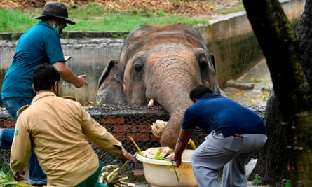 Local wildlife officials and Four Paws vets feed Kaavan