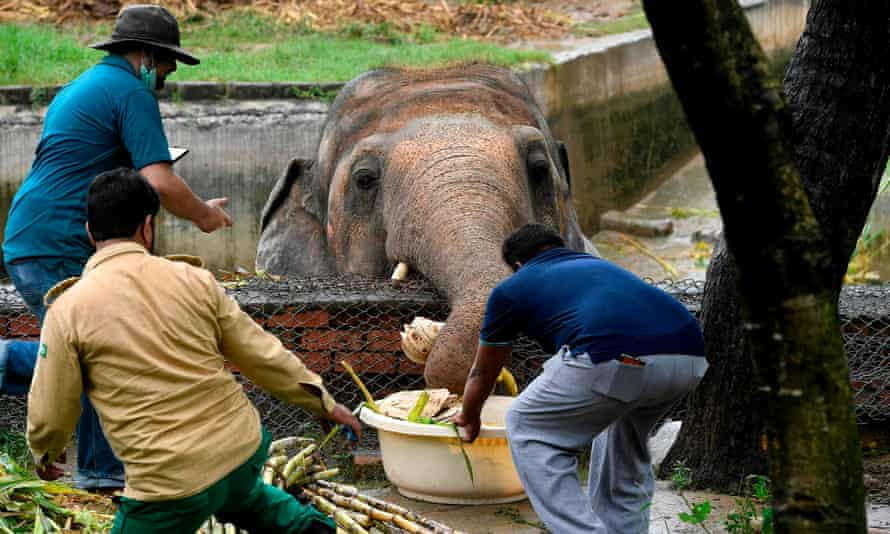 Local wildlife officials and vets from Four Paws International feeding Kaavan.
