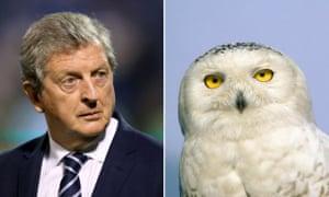 Roy Hodgson (left) and a snowy owl