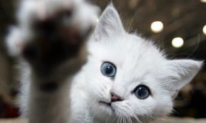 Understanding paw preference could offer insights into an animal's vulnerability to stress, say the scientists.