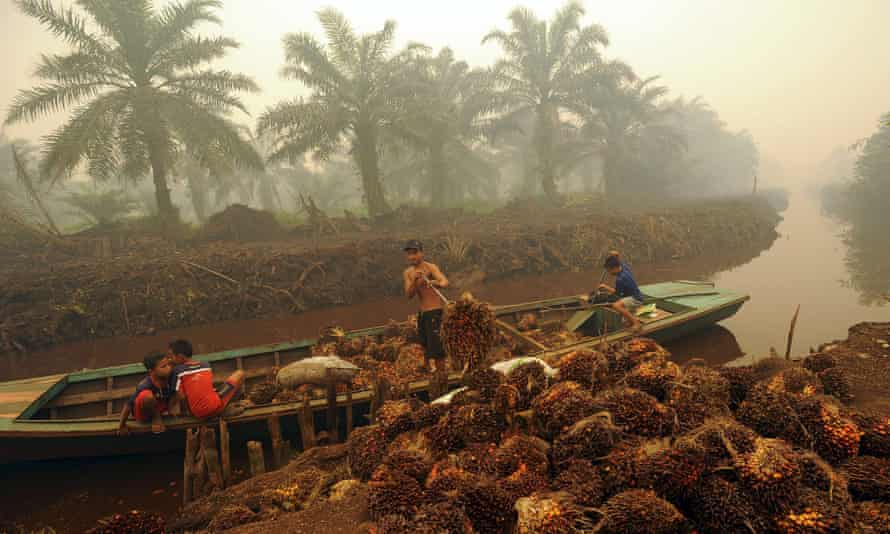 A worker unloads palm fruit at a palm oil plantation on the Indonesian island of Sumatra.