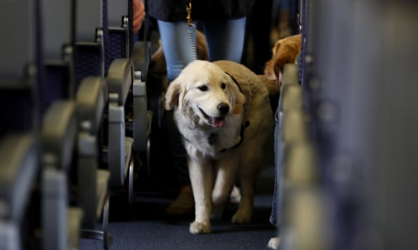 The number of fake assistance dogs is exploding – but who are the