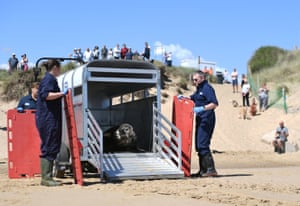 Winterton-on-Sea, UKA grey seal named Sir David Attenborough is released back into the wild in Norfolk after being treated at RSPCA East Winch wildlife centre for severe injuries caused by a plastic frisbee disc stuck round its neck