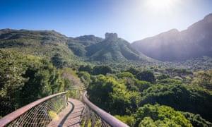 Tree canopy walkway in Kirstenbosch Botanical Garden, Cape Town