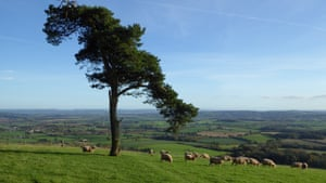 Tree of the week: 'I whispered to the Lone Pine, asking it ...