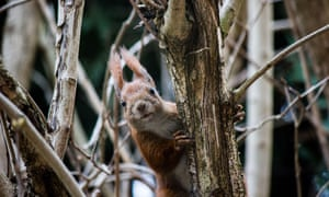 A red squirrel in Warsaw, Poland, on 1 March.