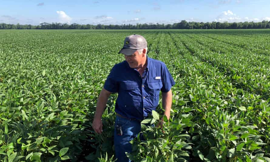 A US farmer with his soya bean crop