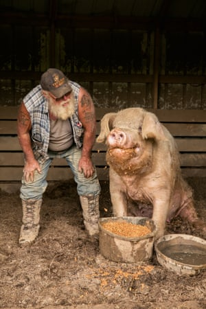 """Rich with rescued pig, The Pig Preserve, Jamestown, TN, 2018Sage found The Pig Preserve, an amazing 100 acre refuge for pigs who roam free and choose their own social groups The Pig Preserve is a 501c3 non-profit that provides sanctuary for rescued farm pigs, pot-bellied pigs and feral pigs that need a safe forever home. The rescued pigs have been variously abandoned, abused, or neglected, have escaped from factory farms and slaughter, or have been used as research subjects. Some also come from 4H clubs or family farms. Rich Hoyle: """"Pigs are smarter than a lot of other animals, and they are socially much more complex. They grieve when one of their members dies, they choose sleeping partners, and rarely do you ever see a pig out here by itself. It's always in the company of three or four or five other pigs of its own choosing. They're really marvelously complex animals and we've grown to love them very dearly."""