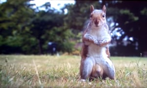 A real showstopper: Bake Off's squirrel.