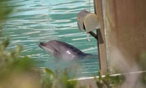 A dolphin abandoned at the Inubosaki Marine Park Aquarium in the city of Choshi