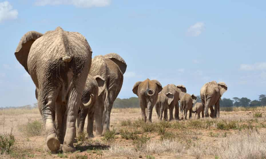 Conservationists are turning to communities in the battle to save Kenya's last 32,000 elephants from poaching.