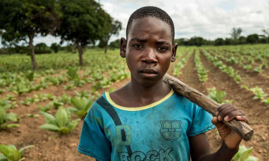 A 14-year-old boy at work on a tobacco plot in Kasungu district, Malawi.