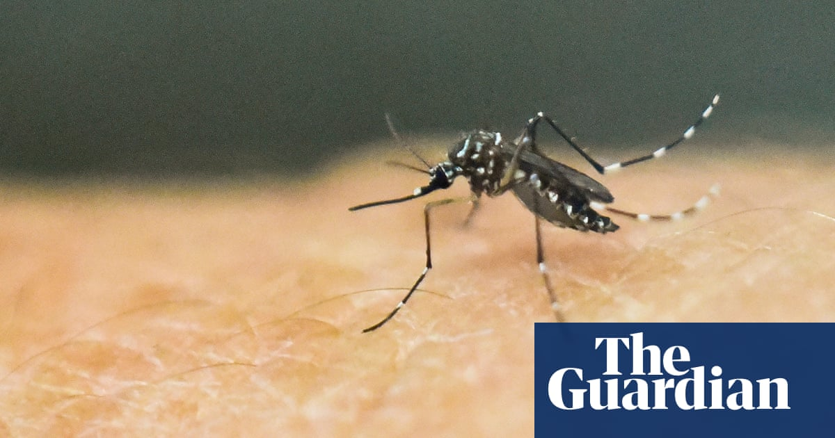 Natural bacteria could wipe out dengue-carrying mosquitos, Australian research suggests