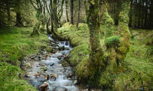 Scottish rainforest