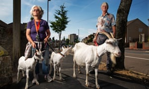 Carol and David Laslett help run Street Goat, a small milking herd. Its billies are hired out for grazing.