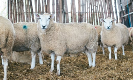 Animals worth GBP3m were stolen from UK farms in 2019.