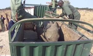 在津巴布韦被人踢的大象