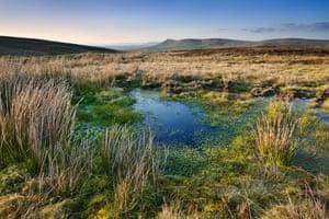 Peat bog, Sperrin Mountains, Northern Ireland