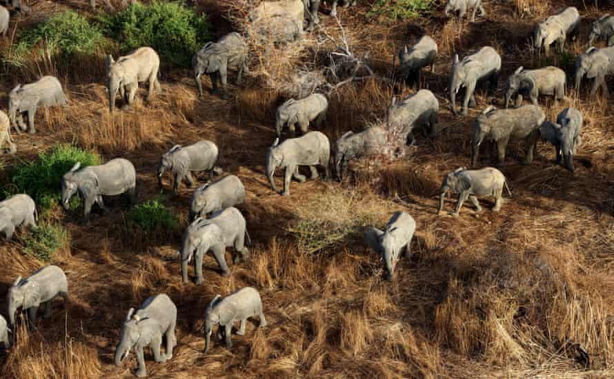 Elephants in Zakouma national park, Chadpopulation
