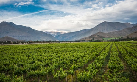 Chilean wines that excel at every price point