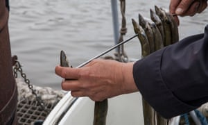 Oosterbaan smokes his eels on board the boat