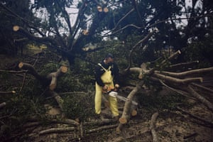 Police clear a tree toppled by Hurricane Delta in Tizimín, Mexico