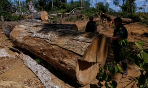 Officers inspect illegal logging in the Amazon