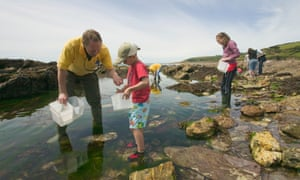 A rockpool ramble in Wembury, Devon