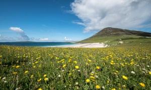 Machair grassland in bloom on Isle of Harris, Scotland