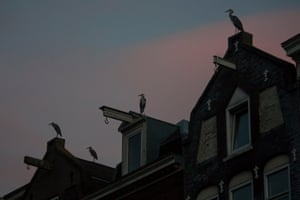 Herons sitting on top of houses