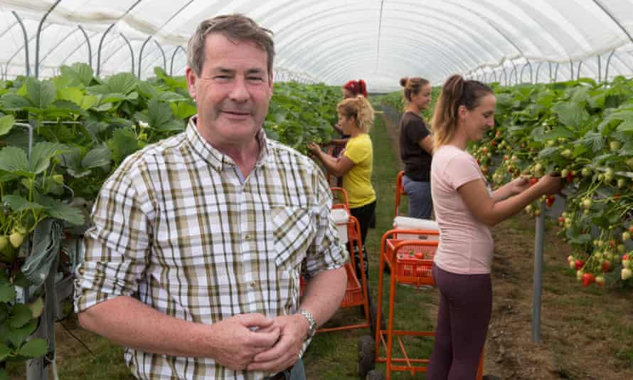 Soft fruit farmer Alistair Brooks, owner of Langdon Manor farm