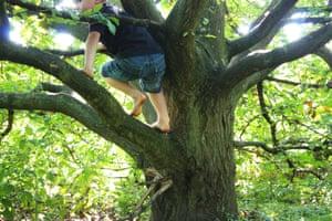 Rear view of a Boy climbing tree