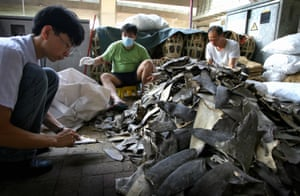 Shark fins are prepared for sale in a Hong Kong market