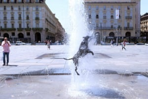 Turin, Italy A dog cools off in a fountain in Turin