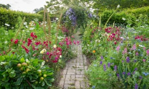 Nicotiana, cosmos , salvia viridis, nigella and clematis line the path.