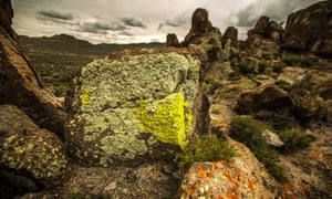 Lichen grows on a rock