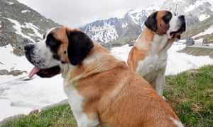 Which artist sang a song about wanting a St Bernard. Or is it just the brandy?