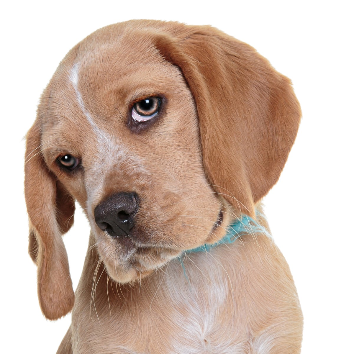 Hot dogs: what soaring puppy thefts tell us about Britain today | Dogs |  The Guardian
