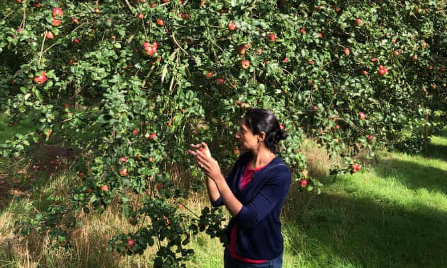 The writer tastes cider apples at Broome Farm