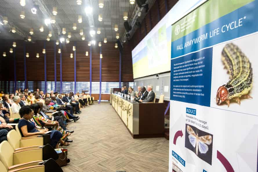 Delegates at a Food and Agriculture Organisation conference in Rome in July discuss the fall armyworm.