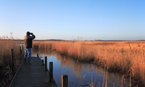A birdwatcher looks over reed beds on the fringe of Hickling Broad, Norfolk, United Kingdom.