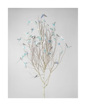 Blue Blossoms 2. Photograph on archival fibre-based cotton rag paper, 2019. Dimensions variable.