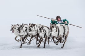 A participant from Nenets Autonomous Okrug rides a sled during a reindeer race