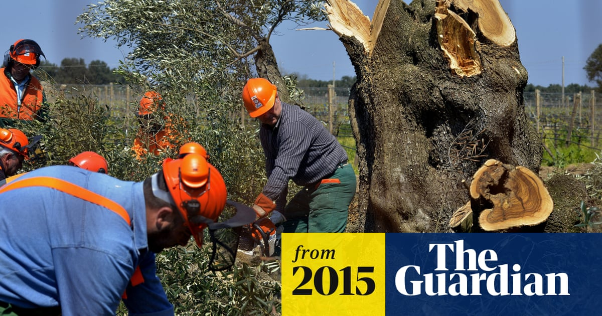 Olive Oil Prices Surge Due To Drought And Disease In Spain And