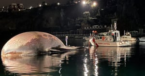 The body of a whale recovered by the Italian coastguard in Sorrento harbour