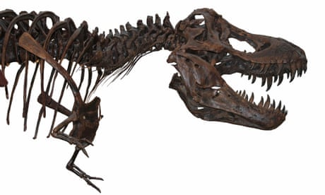 New study finds evidence for a 'fast' dinosaur extinction