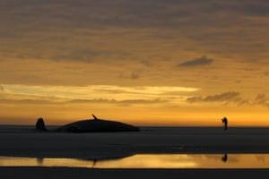 A beached sperm whale on the 'Razende Bol' sandbank